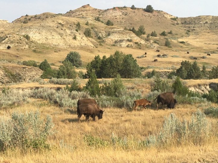 1e - TR (Bison Family)